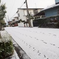 雪ねこ ♪