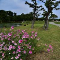 海の中道海浜公園からp3(D810,24-85mm)