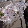 春満開 Part 4