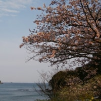 熊野の海と桜