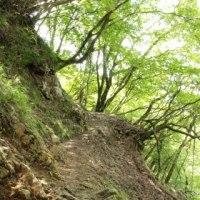 旬は過ぎてました… (^▽^;) 綿向山~竜王山 vol. 1