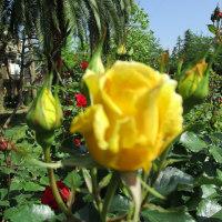 宇喜田東公園のバラがきれいです