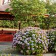 ◎風景点描~紫陽花のある風景その1