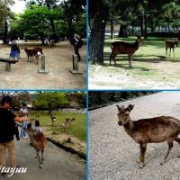 1200頭の鹿がいる「奈良公園」