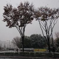 秋過ぎぬまま 冬来たるらし 白たえの…