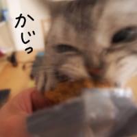 洋菓子くわえた、どらネコ。