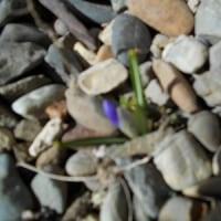 どんなにガンバッテも埋めようのない 虚しさ 春なのに~~…
