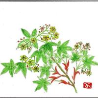 もみじに ちいさな可愛い花が 咲くのを 知っていましたあ?