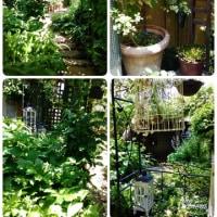 第2回見沼区オープンガーデン M,s gardenへ行って来ました♪