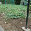 朝散歩は赤松公園