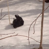 カラス  黒豆  積雪  黒ニンニク