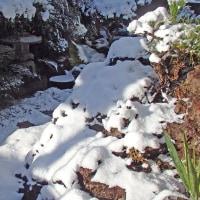 雪の朝に2