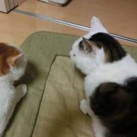 にゃん2017/3/30(木)なかよし~