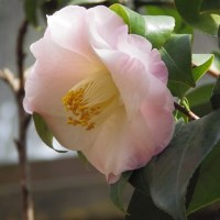 シェフの屋台&早春のハーモニー 5 (服部緑地・都市緑化植物園)