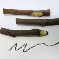 木の枝ペン