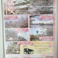 造幣局桜の通り抜け  2017年は4月11日から