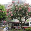 調布市の花木