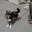 愛犬ゴンタの命日によせて(その3)