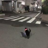 いきなりパトロール