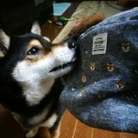 柴犬さんのポーチでしゅ。