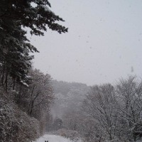 雪ですね~