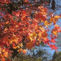 ご近所をぶらり紅葉