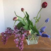 小満……道端のライラックが咲きました