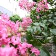 百日紅で遊んだ獣医師の庭
