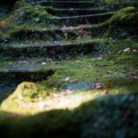 鎌倉 裏大仏散策コースにて 風景写真 / Sony α7RⅡ