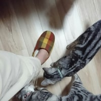 足に群がるサンルナ