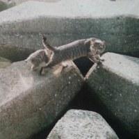 海辺で保護した猫2匹