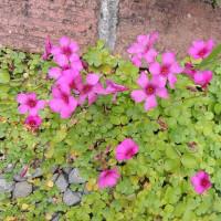 百花繚乱の小さな庭