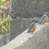 見島発 【田んぼ周辺の野鳥】 (^_^)/~