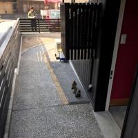 倉敷市呼松での新築、外構工事現場も一旦完了