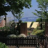 柴田さんちの庭