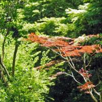 白野江植物園