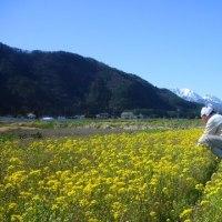 菜花摘み 白き峰々 水鏡 (菜人)