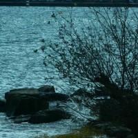 びわ湖の風