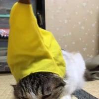 猫のかぶりもの・フルーツ版