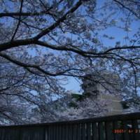 2007 桜