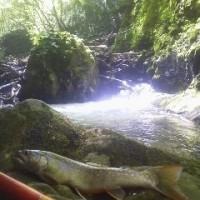 緑眩しい渓