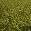 やっぱり安全安心な日本のお米が良いね。