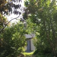 小さな木のトンネルの季節
