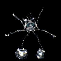海のインベーダー フィロゾーマ現る