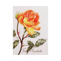 絵画販売・水彩原画「薔薇の花」