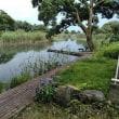 琵琶湖の針江に行ってきました・・・・・2回目・・・・・流線型/フライデーナイト