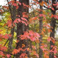 南蓼科の紅葉