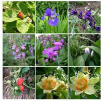 20060521中庭の花