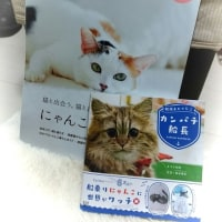 猫の日・猫の本買ってきた~