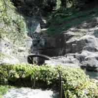 瑞泉寺庭園のカエル
